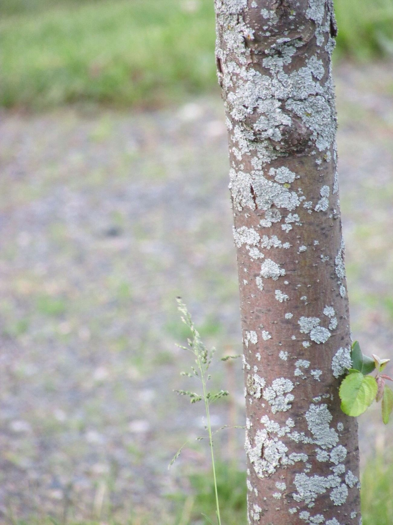 Three Ground Green