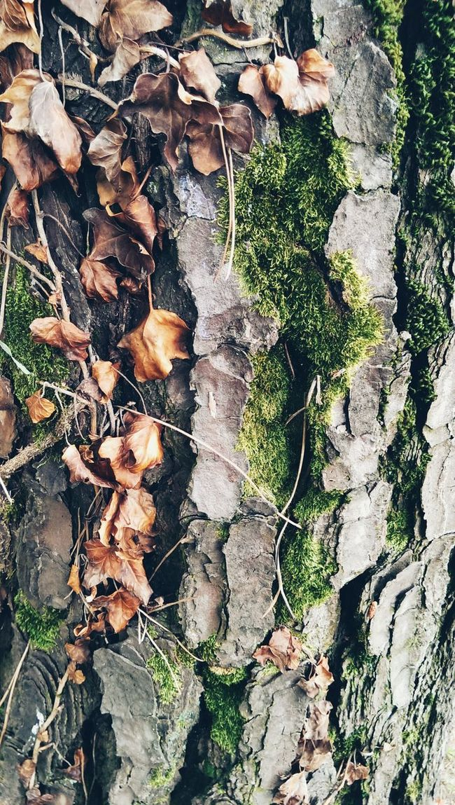 Conifer bark Coniferous Trees Conifers Bark Texture Moss Nature Photography Close-up Plants