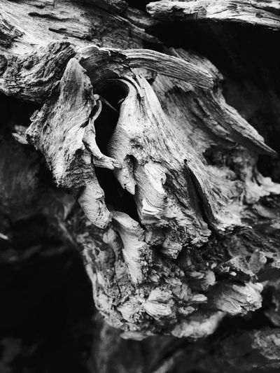 Abstract Nature Close-up Textured  Rough Beauty In Nature Tree Outdoors Knotted Wood Backgrounds Layers And Textures Black And White Abstractions Natural Condition Patterns In Nature Shapes In Nature  Shapes And Forms Shapes And Patterns  Weathered Cracked Perspective Abstract View Faces In Nature I See Faces Driftwood
