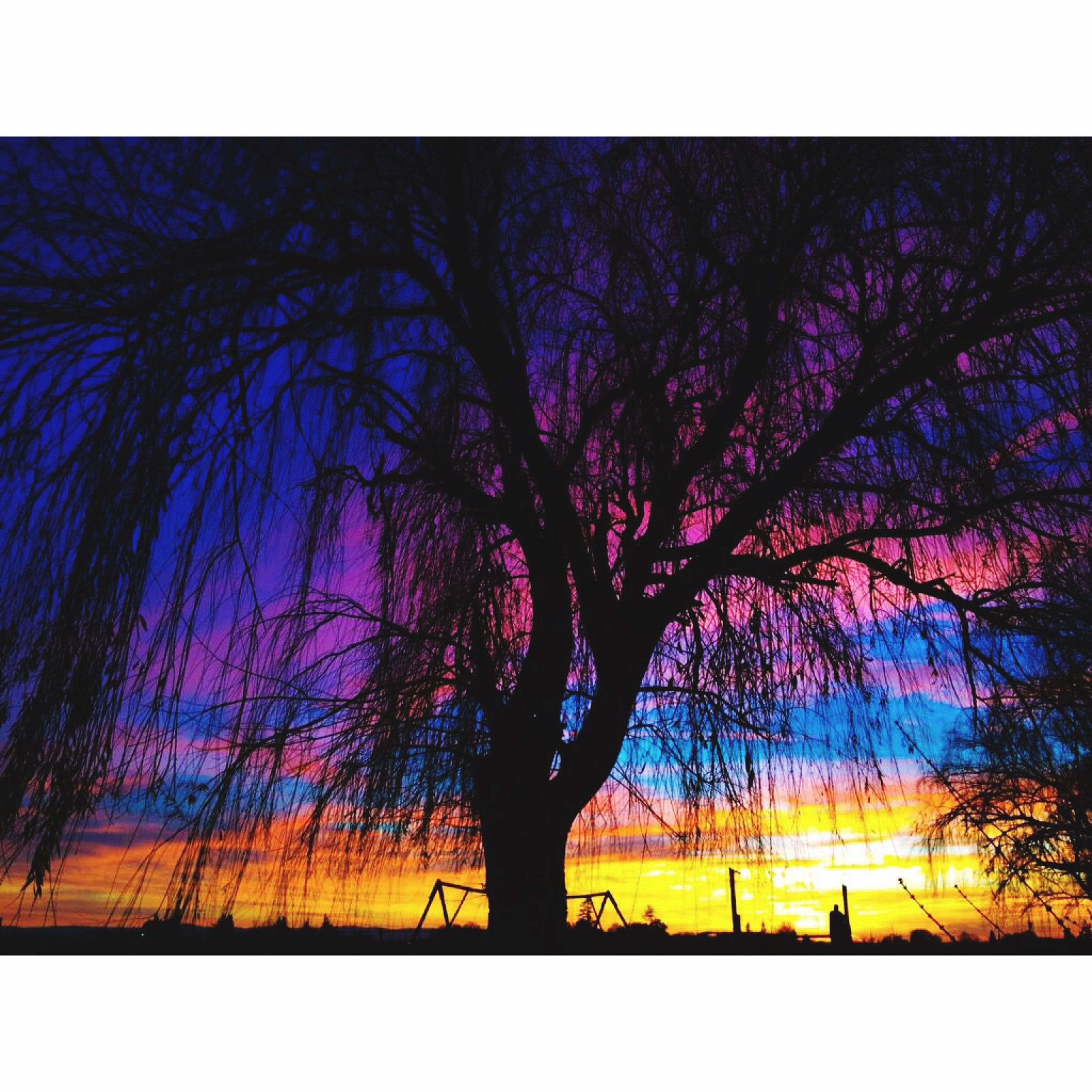 transfer print, tree, bare tree, tranquility, auto post production filter, silhouette, tranquil scene, sunset, branch, scenics, beauty in nature, nature, sky, tree trunk, landscape, growth, idyllic, field, outdoors, no people