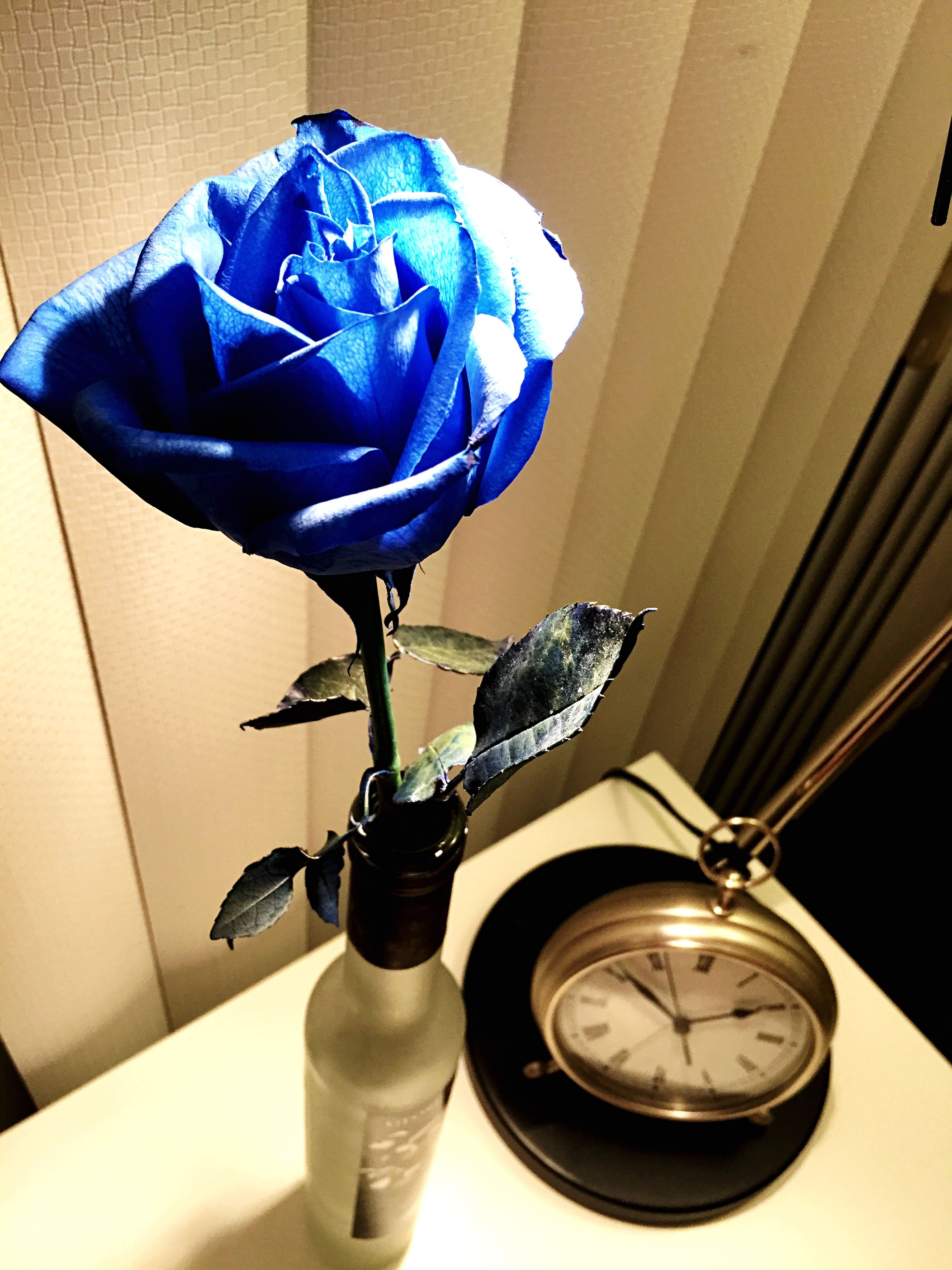 indoors, table, still life, home interior, flower, wall - building feature, domestic room, no people, high angle view, blue, close-up, vase, technology, bathroom, absence, purple, lighting equipment, chair, domestic bathroom, electricity