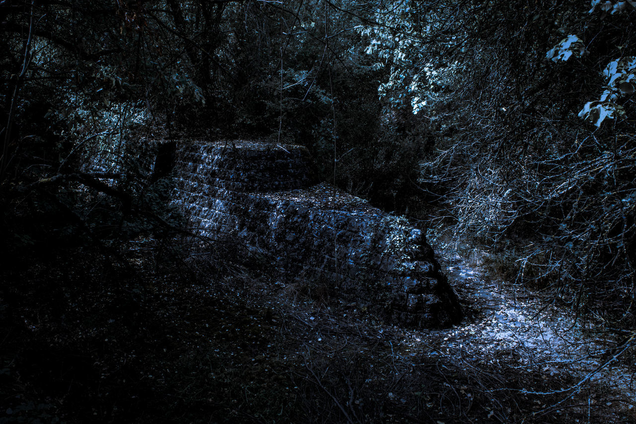 Where the summer came to die Beautiful Blue Dark Explore Forest Moonlight Mountain Nature Nature Night Ominous Outdoors Summer Travel Tree Trees