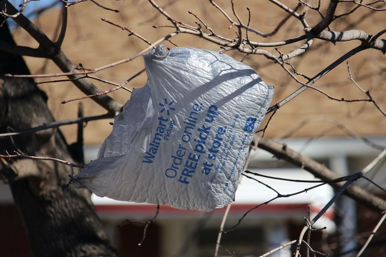 Walmart Shoppingbag Plastic Bag No People Day Close-up Outdoors Walmart shopping bag caught in the tree branches