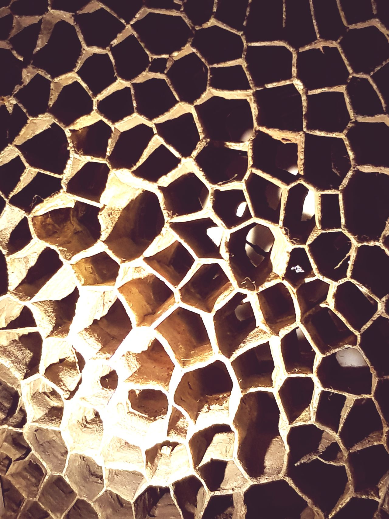 Hexagon Honeycomb Pattern Backgrounds Textured  Close-up No People Indoors  Day Built Structure Beauty In Nature Insect Trypophobia Holes Holes In Rock Architecture Nature Animal Themes Animal Behavior Animals In The Wild United Kingdom