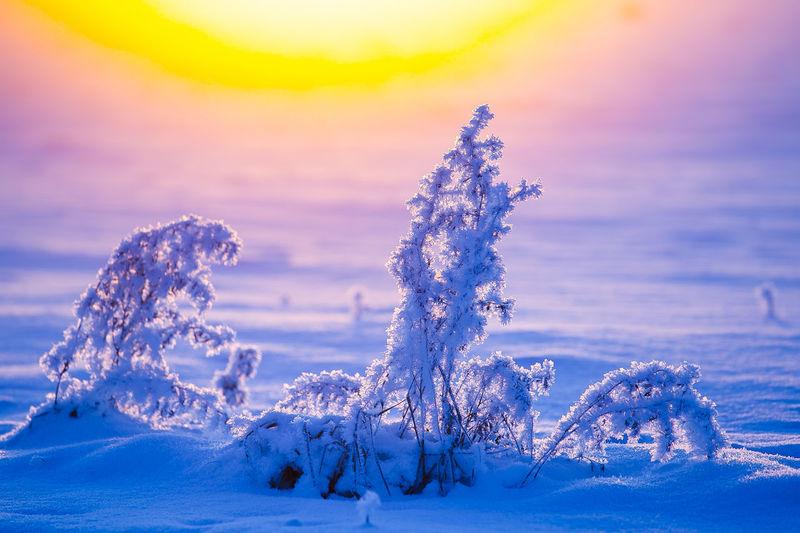 Sunset Nature No People Winter Snow Landscape Beauty In Nature Scenics Cold Temperature Outdoors Day EyeEm EyeEm Nature Lover EyeEm Gallery Eye4photography  EyeEm Best Shots - Nature EyeEm Best Shots Winter Tones The Great Outdoors - 2017 EyeEm Awards