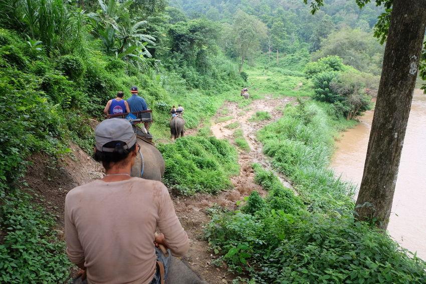 タイ Thailand 象 Elephant Jungle Animals Wild Travel