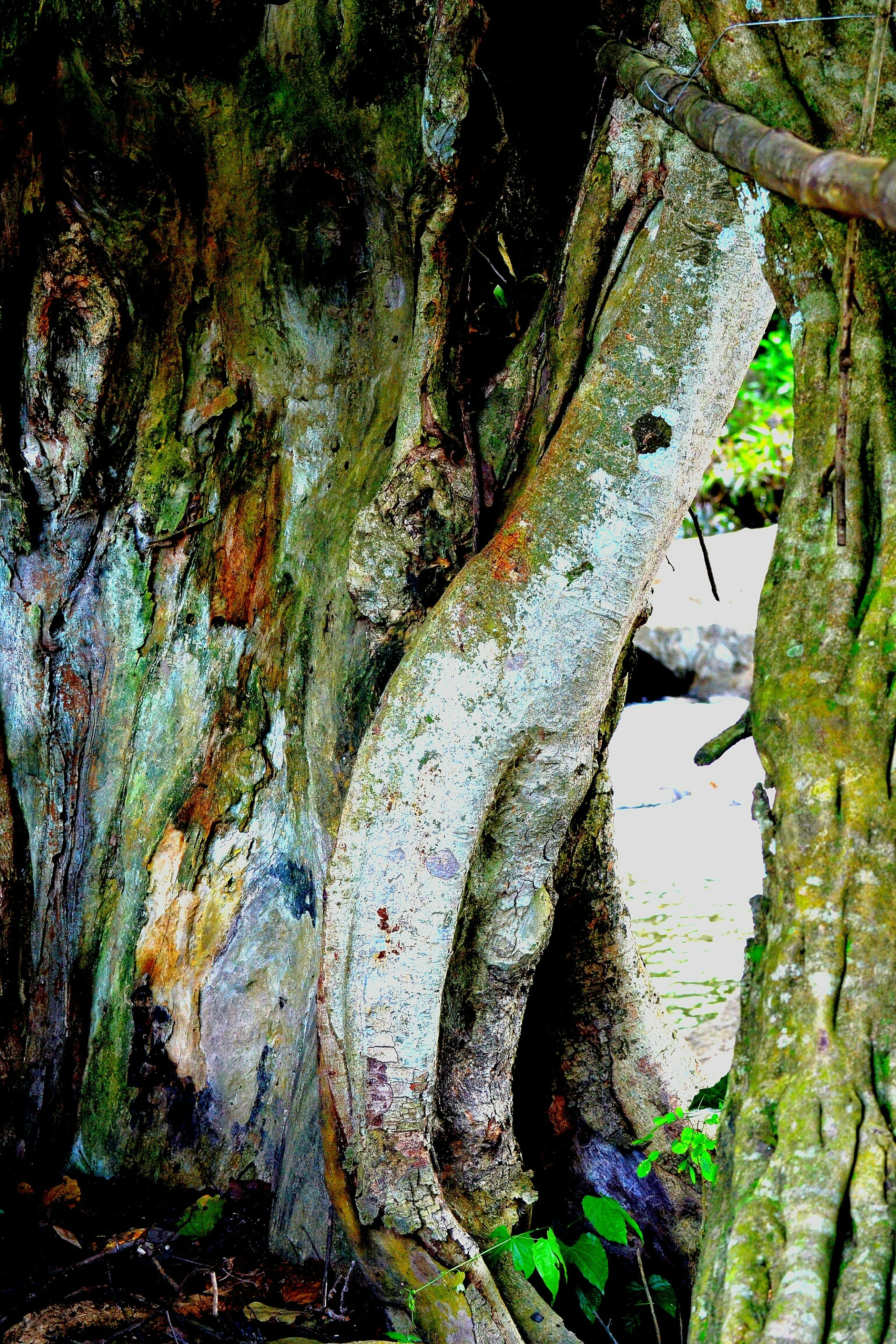 tree, tree trunk, weathered, old, textured, damaged, forest, moss, nature, growth, close-up, tranquility, rough, day, deterioration, low angle view, outdoors, no people, run-down, rock - object