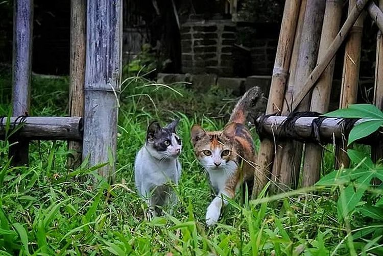 #animal Portrait Animal Themes Mammal Outdoors No People Domestic Animals Day Pets Sitting Nature Grass Togetherness Domestic Cat Feline