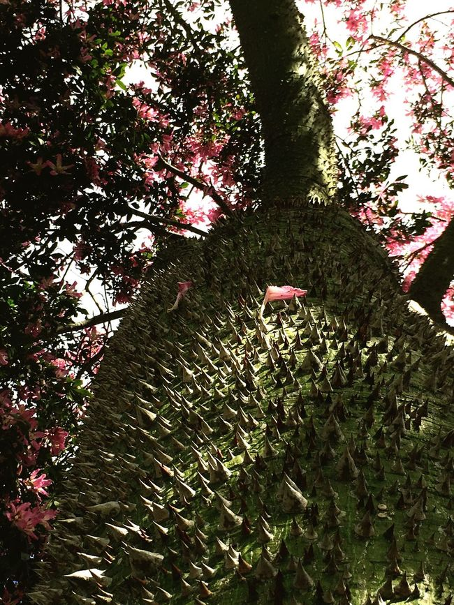 Tree Growth Nature No People Branch Low Angle View Green Color Outdoors Day Beauty In Nature Lookingup Kopak Tree Tree Trunk Pink Pink Flower