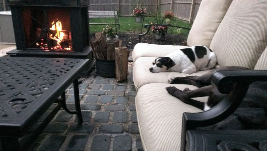 Pet Portraits Domestic Animals Sofa Sleeping Lying Down No People Comfortable Dog Lounging