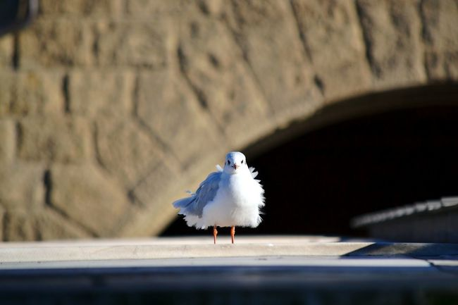 Bird One Animal Animal Themes Selective Focus Möwe No People Day Animal Behavior Seagull Vogel