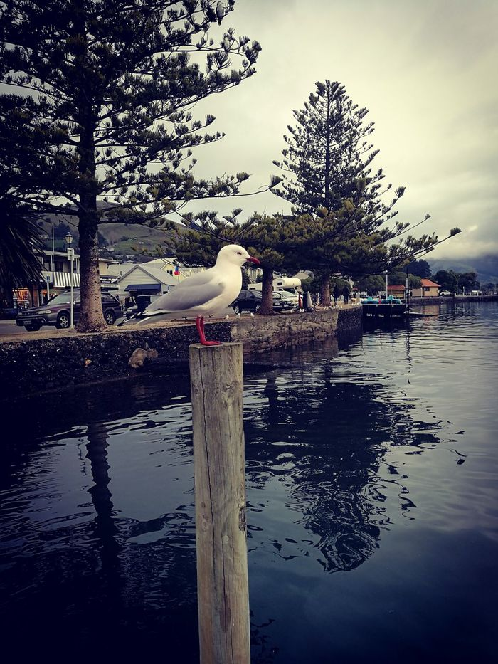 Cheeky wee fellow. Loce bird's... even seagulls... Birds Of EyeEm  Birds Animals In The Wild Animal Themes Reflection No People Day Nature Perching Sky Outdoors Lake Bird Water Animal Wildlife Wharf Black Color Mindfulness Scenery Peace And Quiet Magic My Photography Sea Seashore One Animal