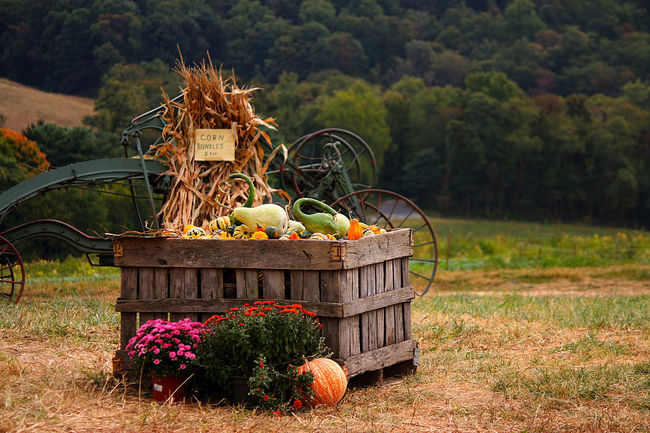 Autumn Basket Flower Freshness Nature No People Outdoors Plant Pumpkins Rural Scene
