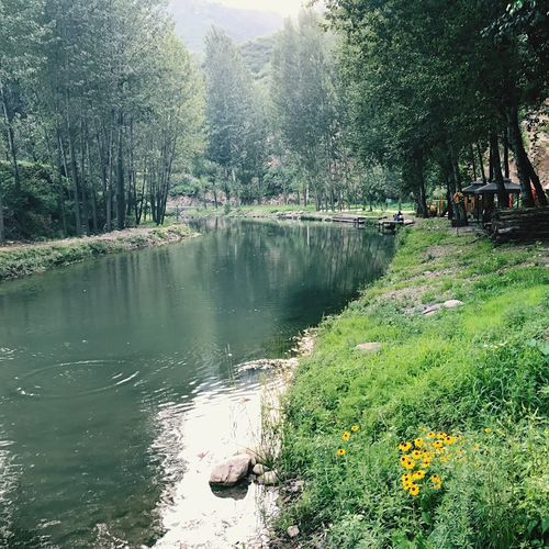 Nature Tree Growth Beauty In Nature Day Water Outdoors No People Tranquil Scene Tranquility Flower Scenics Lake Plant Forest Landscape Grass Sky