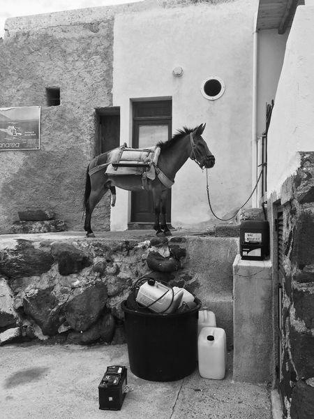 Asino Isole Eolie Messina Capo D'Orlando Black & White
