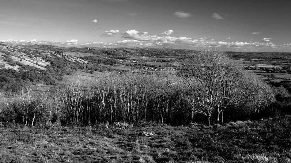 Agriculture No People Landscape Nature Outdoors Day Sky Trees Crook Peak Somerset