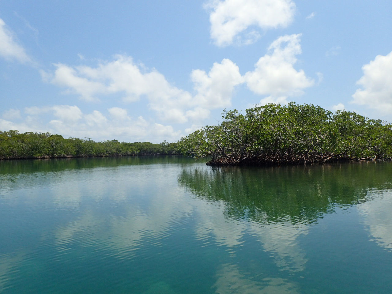 Beauty In Nature Blue Calm Cloud Cloud - Sky Day Green Color Growth Idyllic Mangroves Nature No People Non-urban Scene Outdoors Reflection Remote Scenics Sky Tranquil Scene Tranquility Tree Water Waterfront Belize  Travel Photography