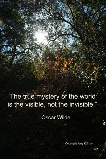 """This provocative #quote of #OscarWilde appears over a picture at the """"SantaMargaritaEcologicalReserve in #Fallbrook. If this #quotograph speaks to you, please #repost it. Fallbrook Q Santa Margarita Ecological Reserve Leaves Quotograph Sunset"""