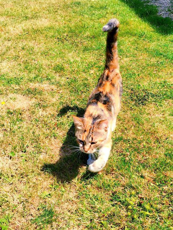 Catfie CHATFIE Cats Of EyeEm Cat's Eyes Cat Chat Mon Ami Le Chat