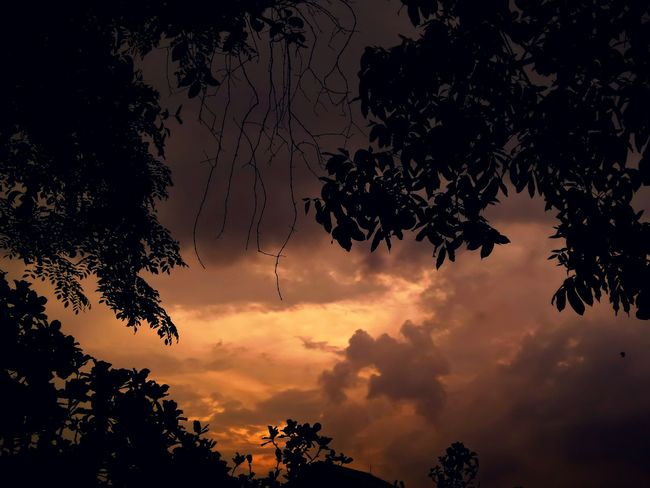 Twilight Silhouette Sunset Lookingup Hugging A Tree Sky And Clouds