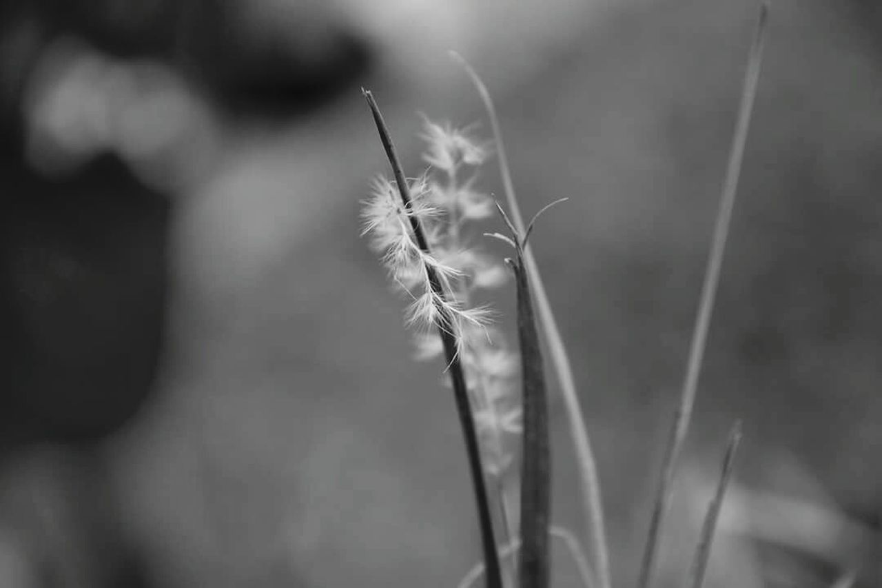 growth, plant, nature, no people, cereal plant, close-up, day, wheat, beauty in nature, ear of wheat, outdoors, fragility, freshness