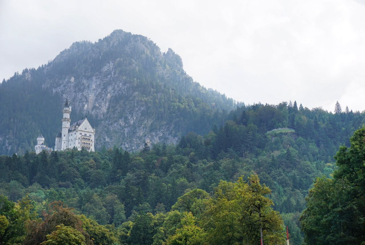 Pinaceae Tree Pine Tree Mountain Forest No People Outdoors Nature Mountain Range Day Beauty In Nature Sky Castles Germany Alps AlpsMountain Disney Disney Castle Neuschwanstein Neuschwanstein Castle