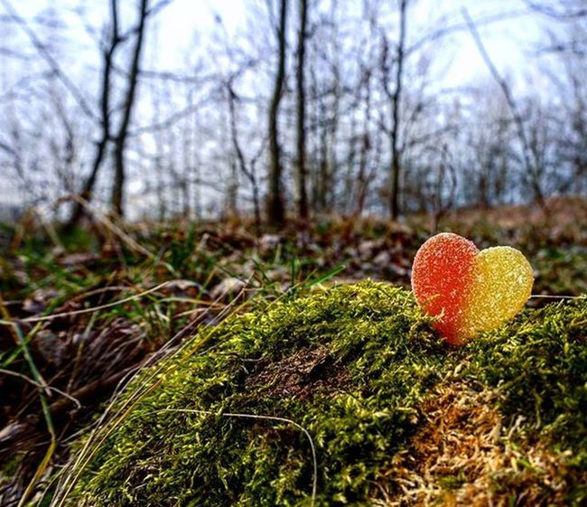 Candy Heart Love Natural Moss Green Red Yelow Sugar Beautyfullday Beautifull Photo Sony Alfa A6000 Wonderfoulphoto Wonderfoulplace Wonderful Ilakephoto Foryou My M Instagram