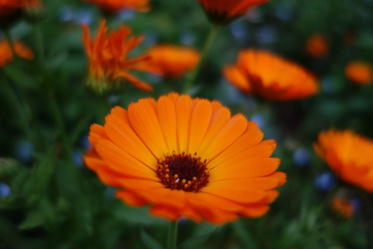 Blüte Heikobo Blütentraum Blütenzauber Blütenpracht
