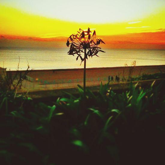 Flower and sunset. Sunset Flower Beach Beautiful