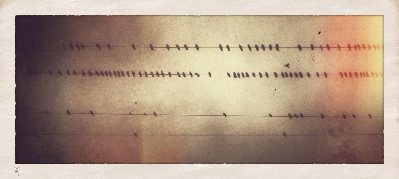 Bird Music.