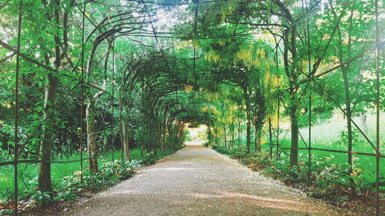 Growth Paths Green Color The Way Forward Nature Outdoors Exploring Tunnel Summer Light
