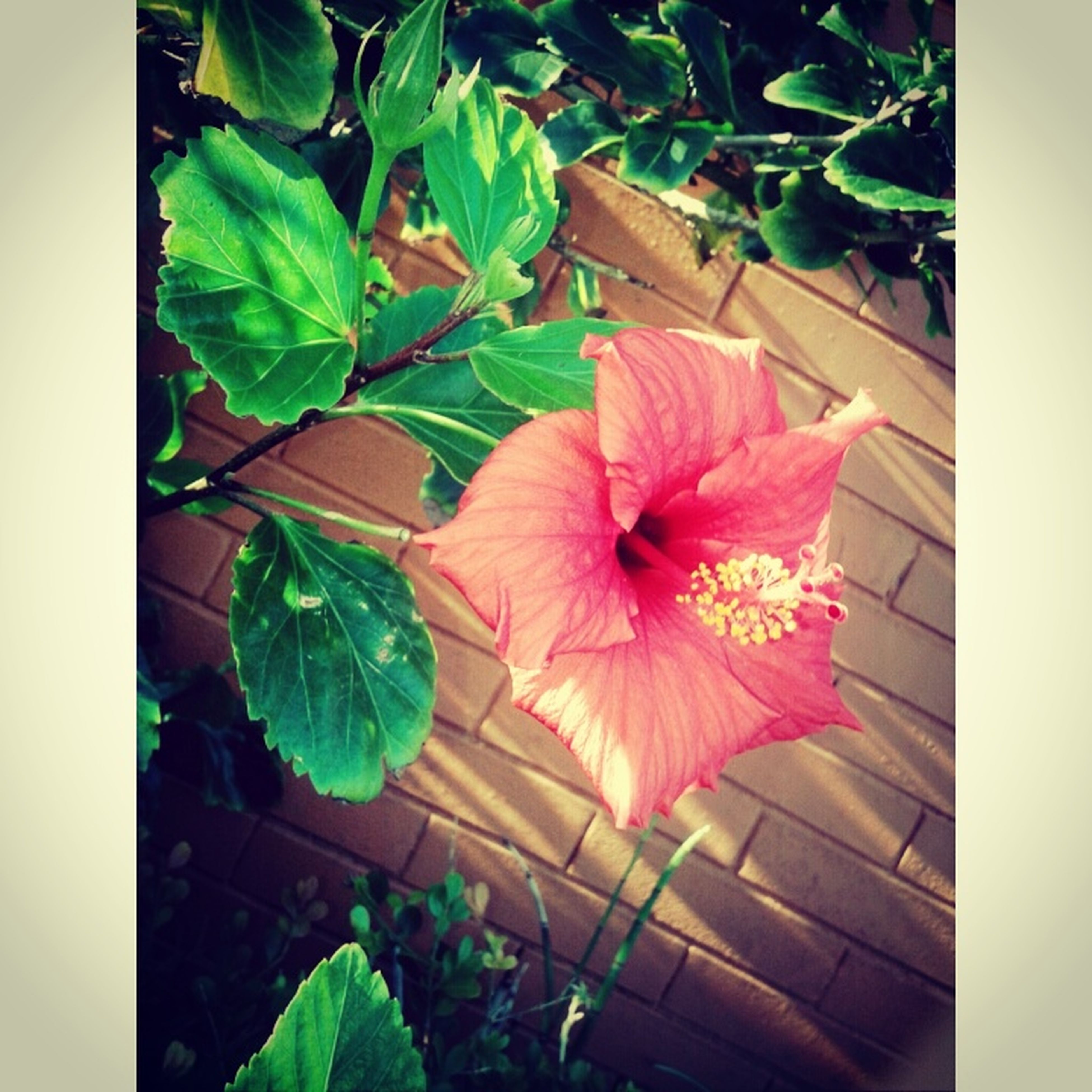 transfer print, flower, leaf, auto post production filter, growth, fragility, plant, petal, freshness, beauty in nature, nature, flower head, high angle view, close-up, potted plant, pink color, green color, wood - material, day, no people