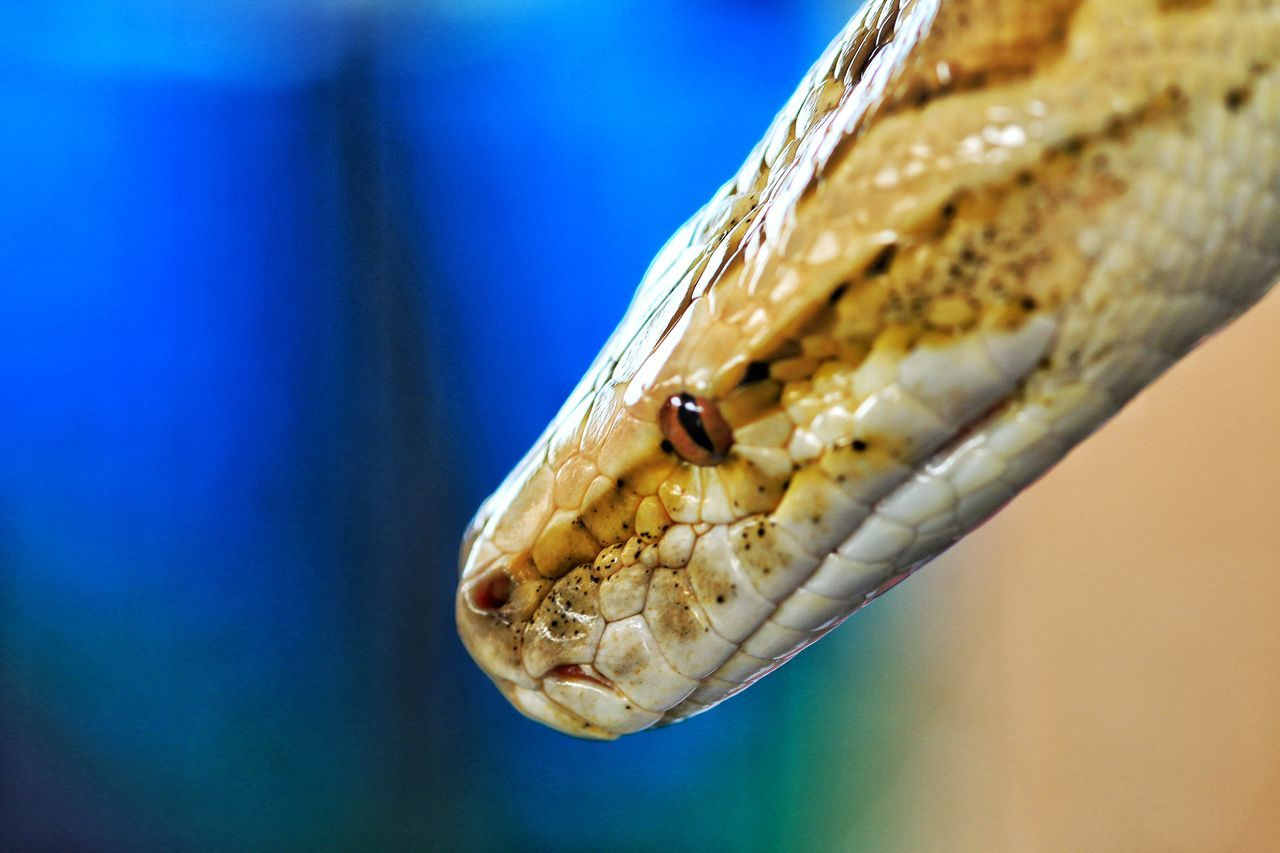 Beautiful stock photos of snakes, Animal Body Part, Animal Skin, Animal Themes, Animals In The Wild
