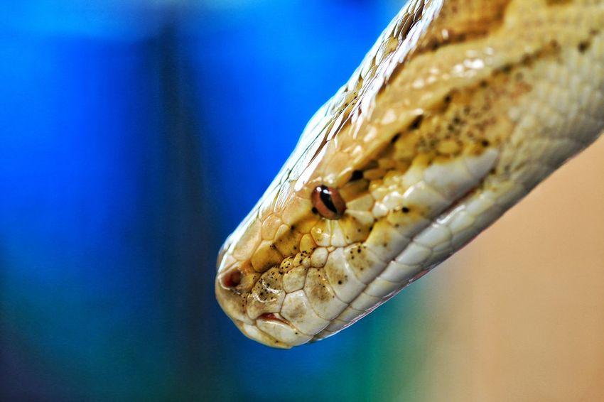 EyeEm Best Shots - Macro / Up Close EyeEm Macro Macro Photography Macro_collection Macro EyeEm Best Shots Animal_collection Animal Photography Animals Animal Macro Nature Snake Reptile