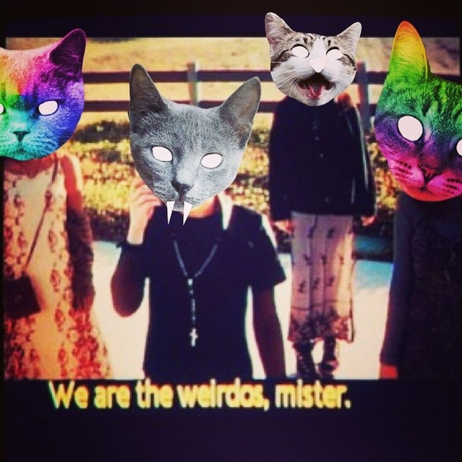 Venturing out for the day ??❤ Catheads Catsofinstagram Cats Fiercefelines wearetheweirdos meowmeow instacats