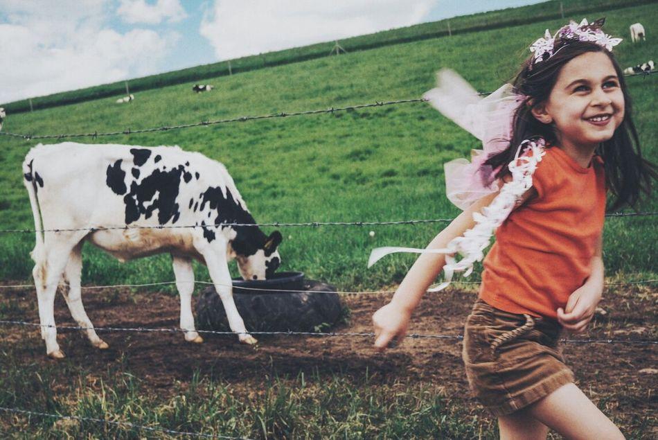 Beautiful stock photos of cow, Animal Themes, Caucasian, Cheerful, Childhood