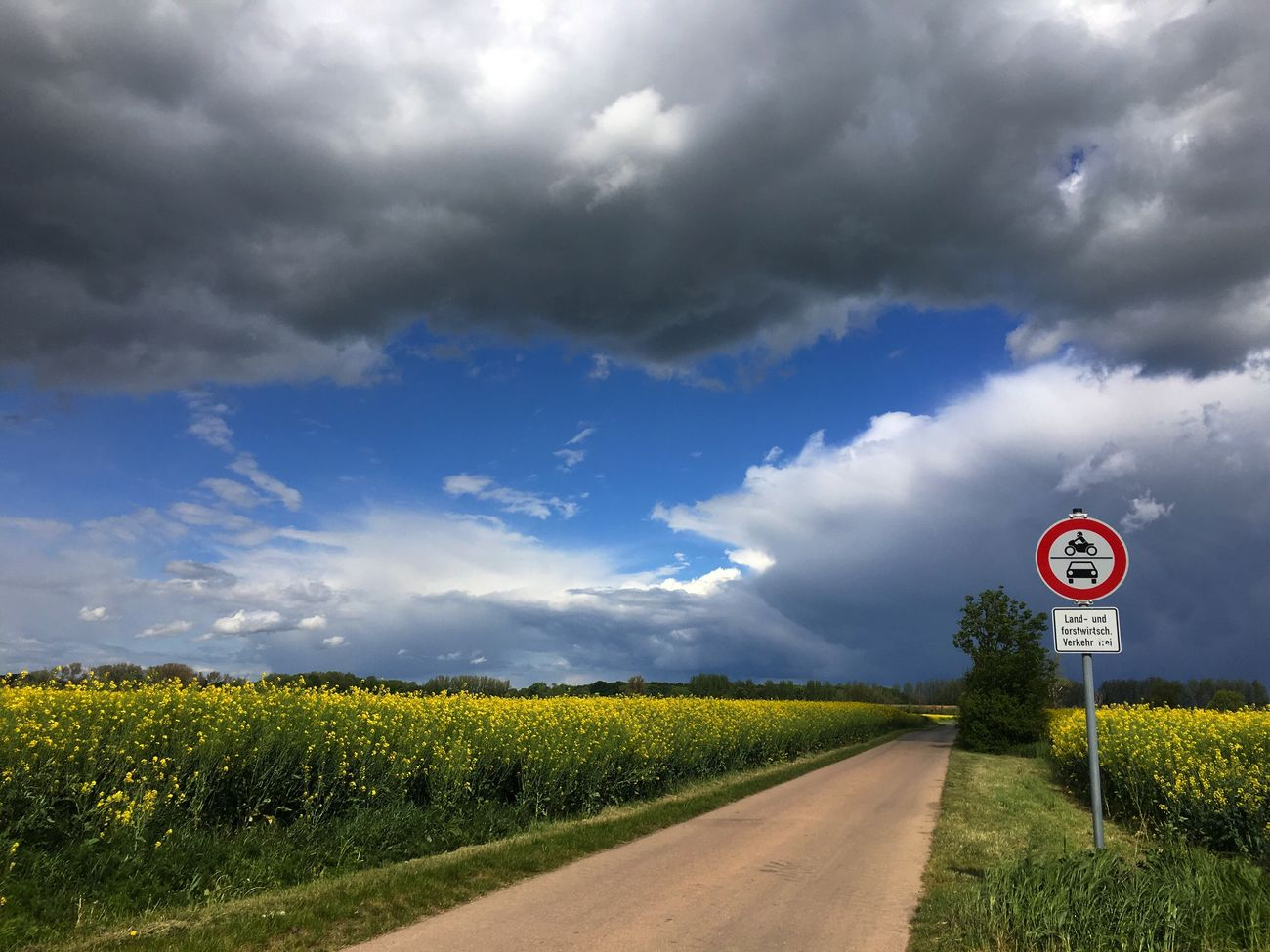 Nature Sky Cloud - Sky Growth No People Beauty In Nature Field Road Sign Day Outdoors Grass Communication Scenics The Way Forward Speed Limit Sign Tree Tranquil Scene Road Landscape Clouds Blue Blue Sky Summer Storm Cloud Clouds And Sky
