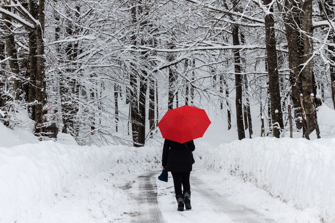 Red Snow Winter Cold Temperature One Person Nature One Woman Only Beauty In Nature Day White Trees EyeEm Nature Lover Nature_collection Nature Photography Landscape Scenics Outdoors Umbrella Forest Walking On Snow Muntain in Sila Calabria (Italy)