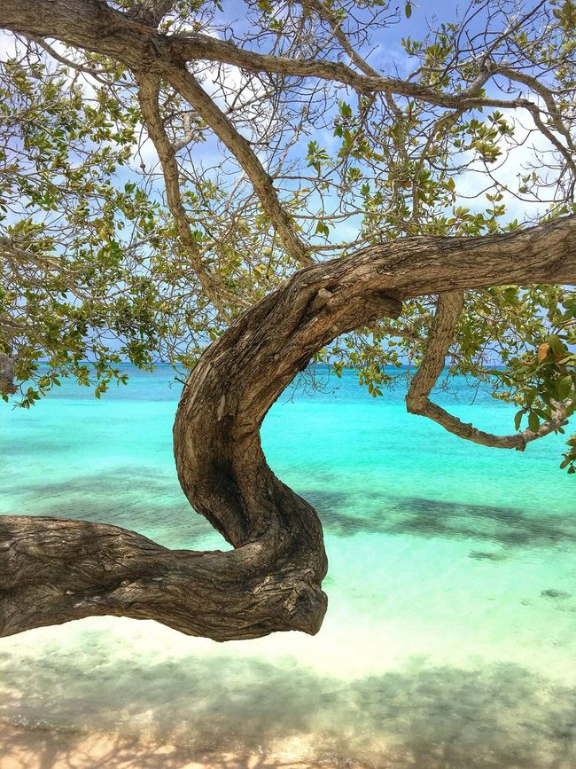 People And Places Aruba Caribe Caribbean Paradise Paraíso Island Island Life Wonderful Tree Tree Trunk Branch Tranquil Scene Water Tranquility Sea Nature Green Solitude Scenics Day Growth Blue Sky Remote Ocean Beauty In Nature Coastline Green Color