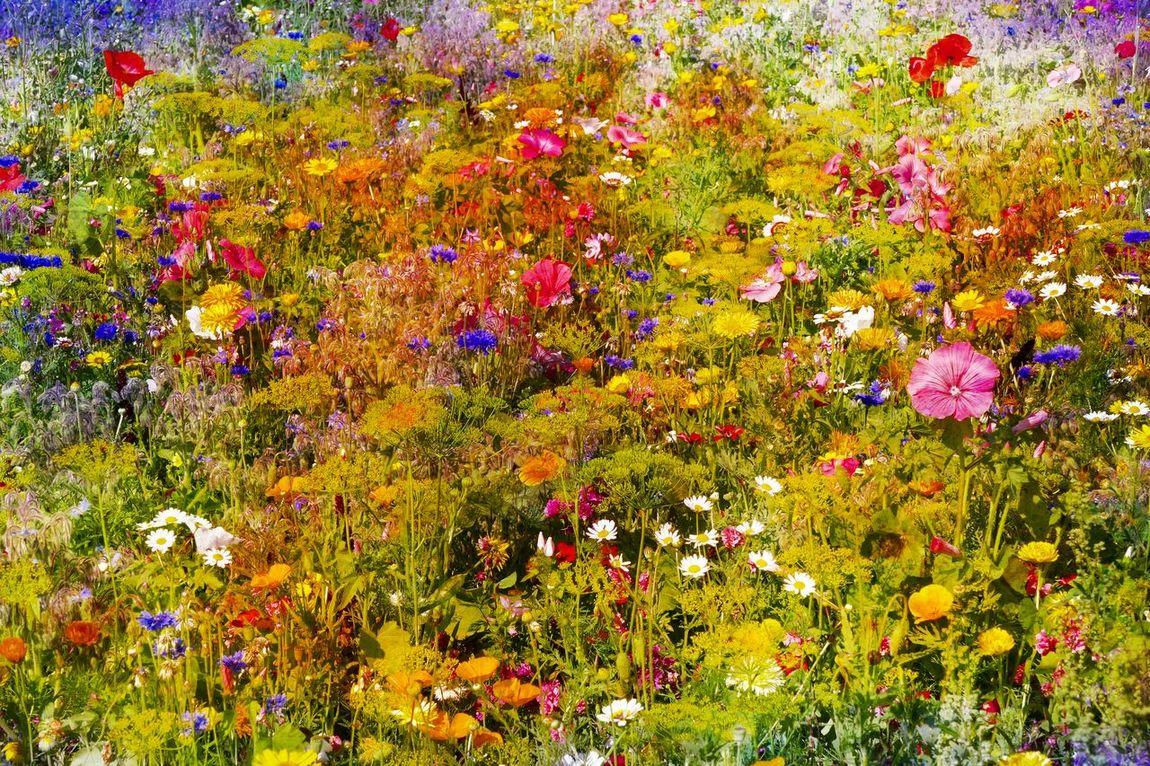 Viele bunte Frühlingsblumen auf einer Wiese Blumen Bluehen Botanik Bunte Blumenwiese Flowers Frühling Wiese  Wildblumen Wildblumenwiese