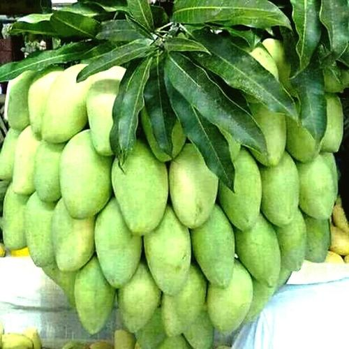 Good mrng with some mangoessss for my all sweet&cute frnd