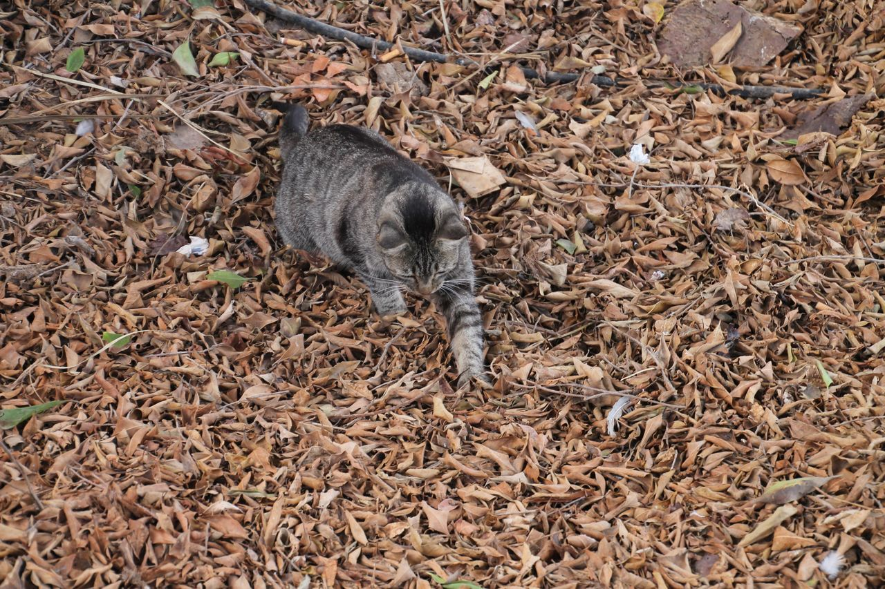 High Angle View Of Cat On Leaves Covered Field