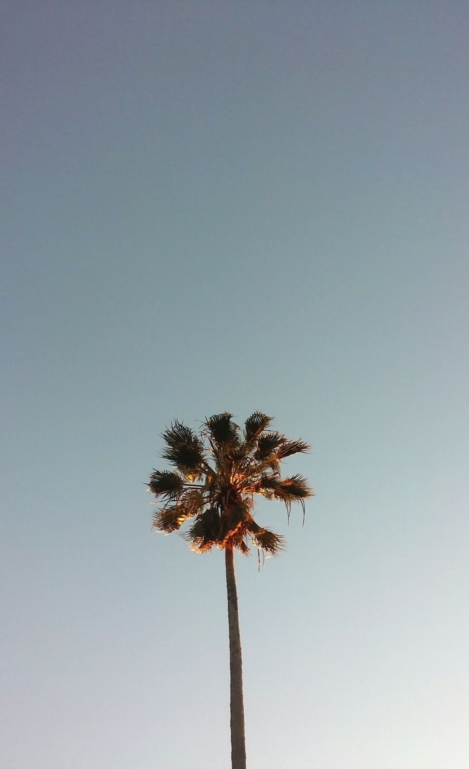 Fotografia VSCO Palm Tree Sky Tree Tranquility Vscogrid Vscogram Fotography VSCO Photographer Photography Photooftheday Vscofotografia_ Foto Photo Brasil Vscoeyeem Photoshoot Bagé Like Day Nature Clear Sky