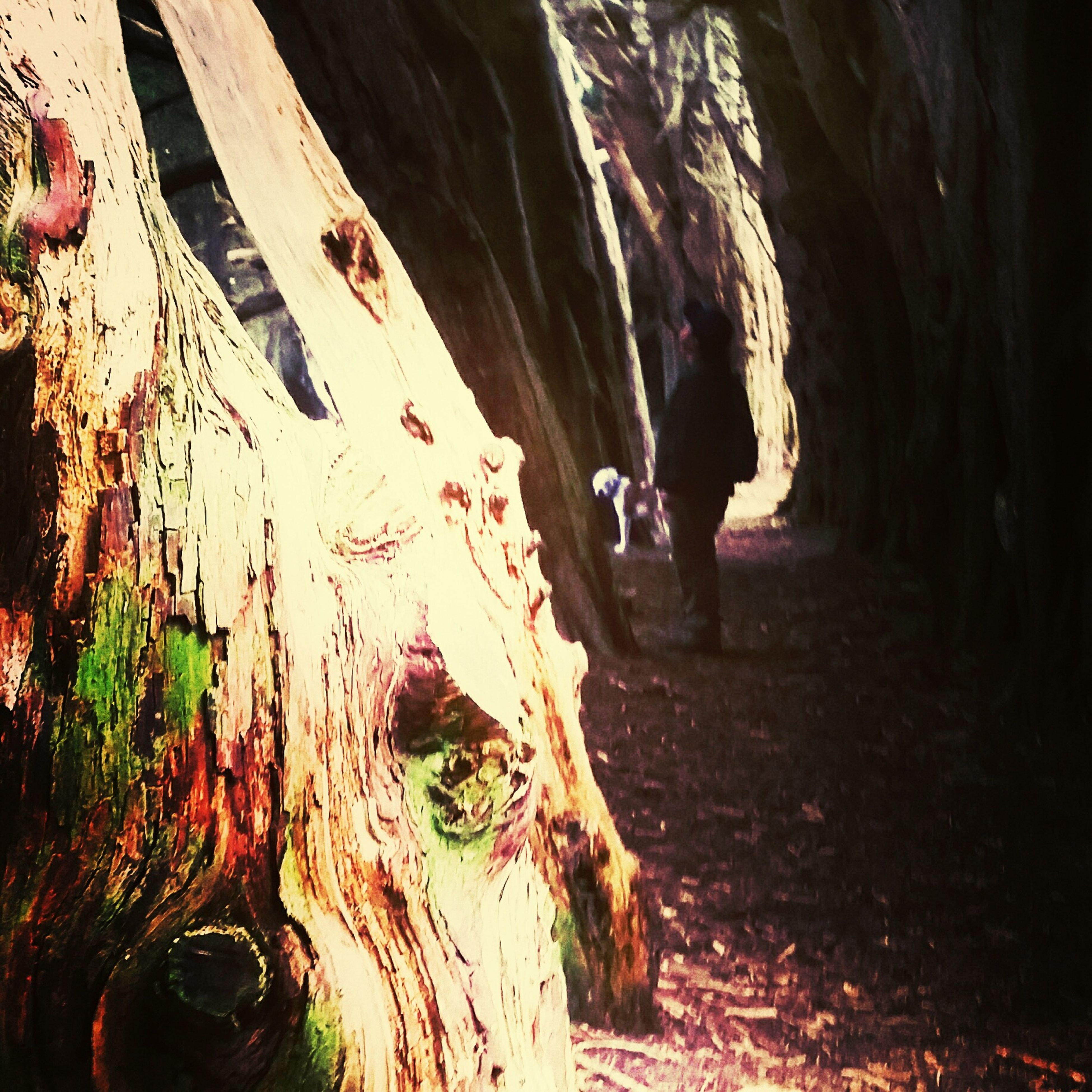 nature, cave, day, outdoors, no people, adventure, beauty in nature, close-up