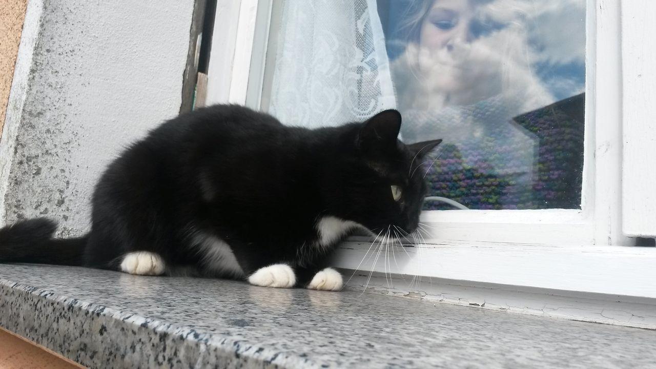 Katze Fenster Spiegelung Taking Photos Hi! Hello World Cat♡ Besuch Gast Spiegel Begegnung