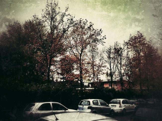 Urban Nature TreePorn Colors Of Autumn