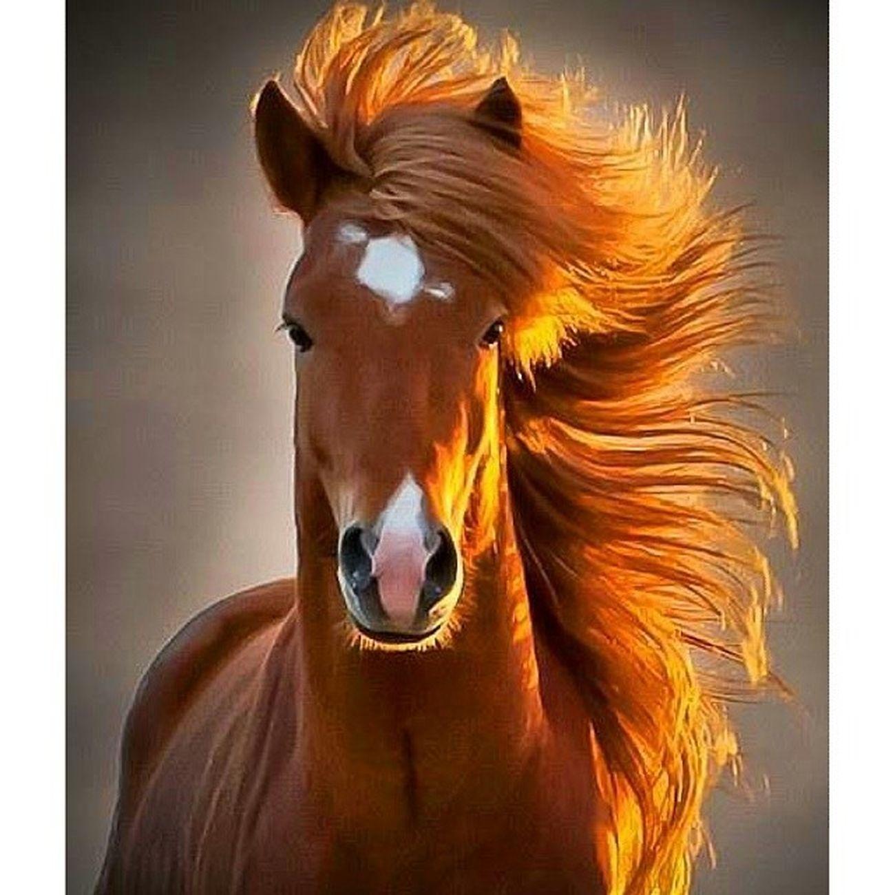At Asalet Guzellik GUC karizma horses nobility beauty power charisma picoftheday
