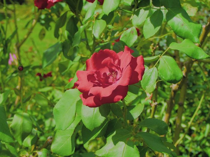 Vegetation Green Pink Flower Flowerporn Nature