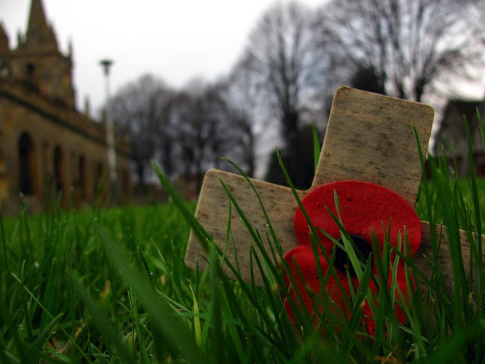 ArmisticeDay British Cross England Field Flanders Fields Focus On Foreground Grass Graveyard Great Britain Memento Memorial Memorials Poppy Poppy Flower Red Remembering Remembrance Remembrance Poppy Remembranceday Remembrancepoppy Uk War War Memorial Wooden Cross
