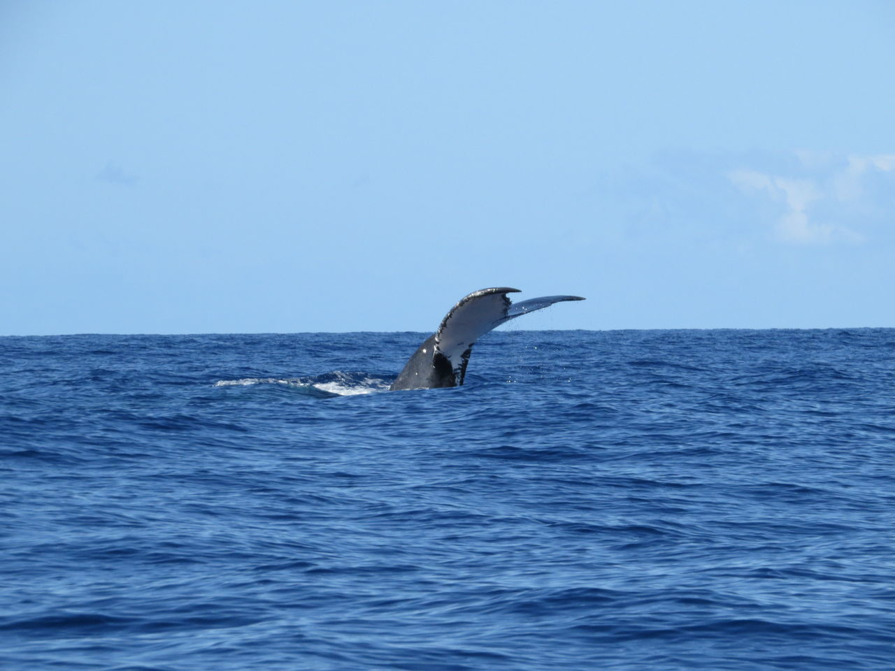 Beautiful stock photos of blue whale, Animal Themes, Blue, Clear Sky, Horizon Over Water